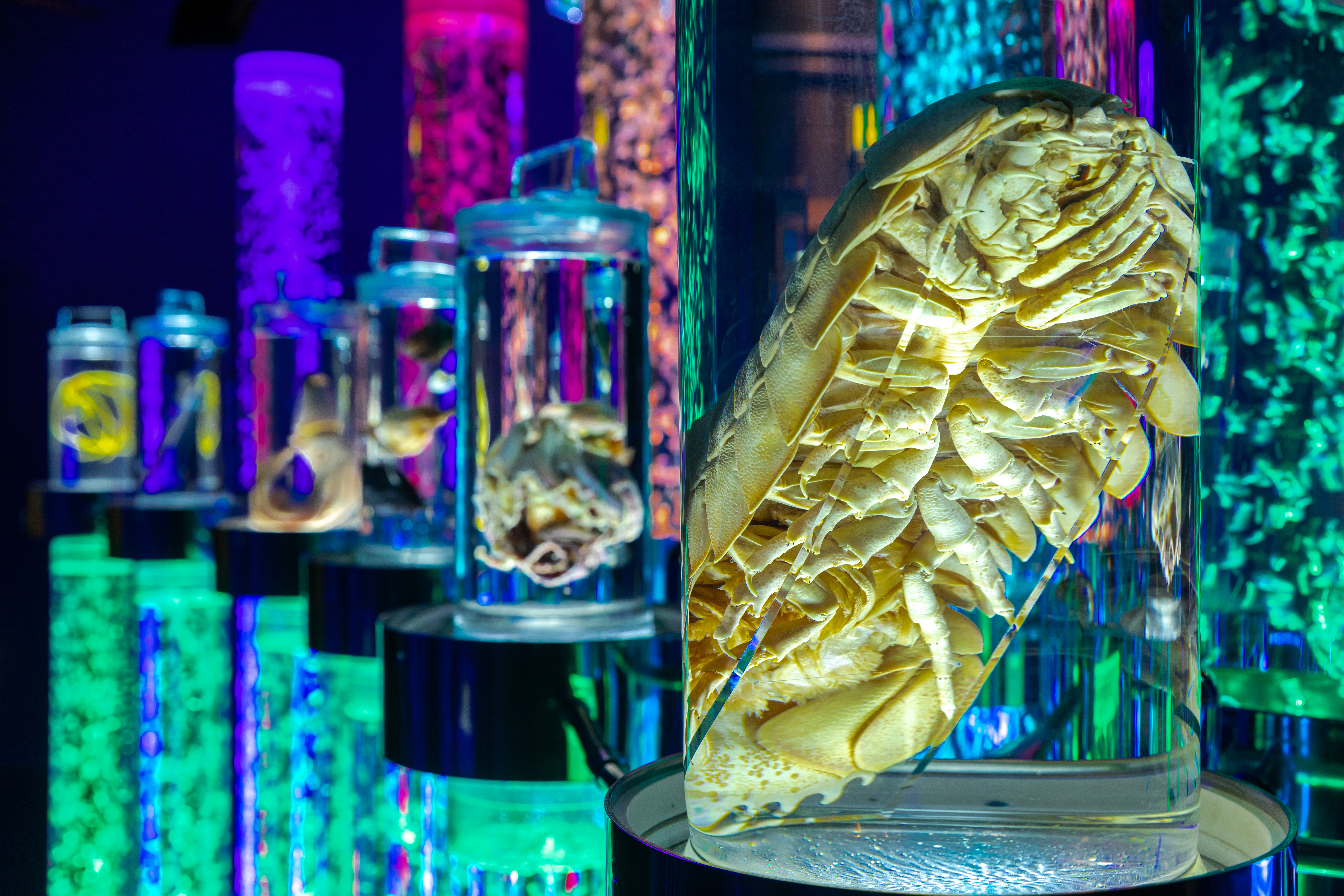 real Monsters of the Deep at National Maritime Museum Cornwall